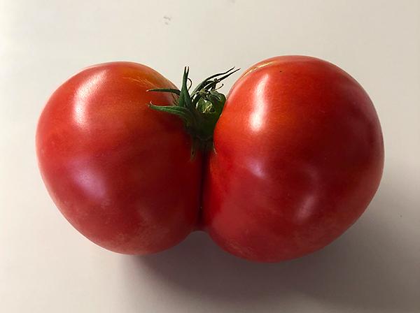 下関の美味しい野菜ー垢田のトマト