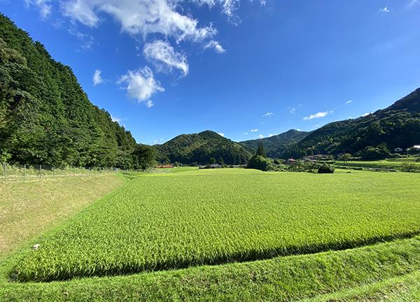 山口県の原風景ー夏の田んぼと青空