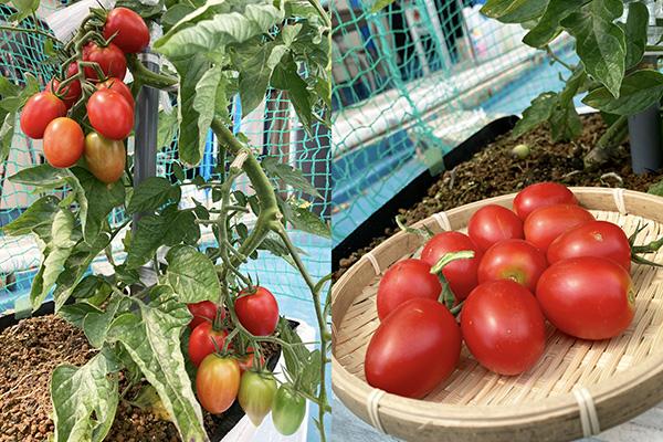 ナス、ミニトマト、スイカ…今年も夏野菜に挑戦!